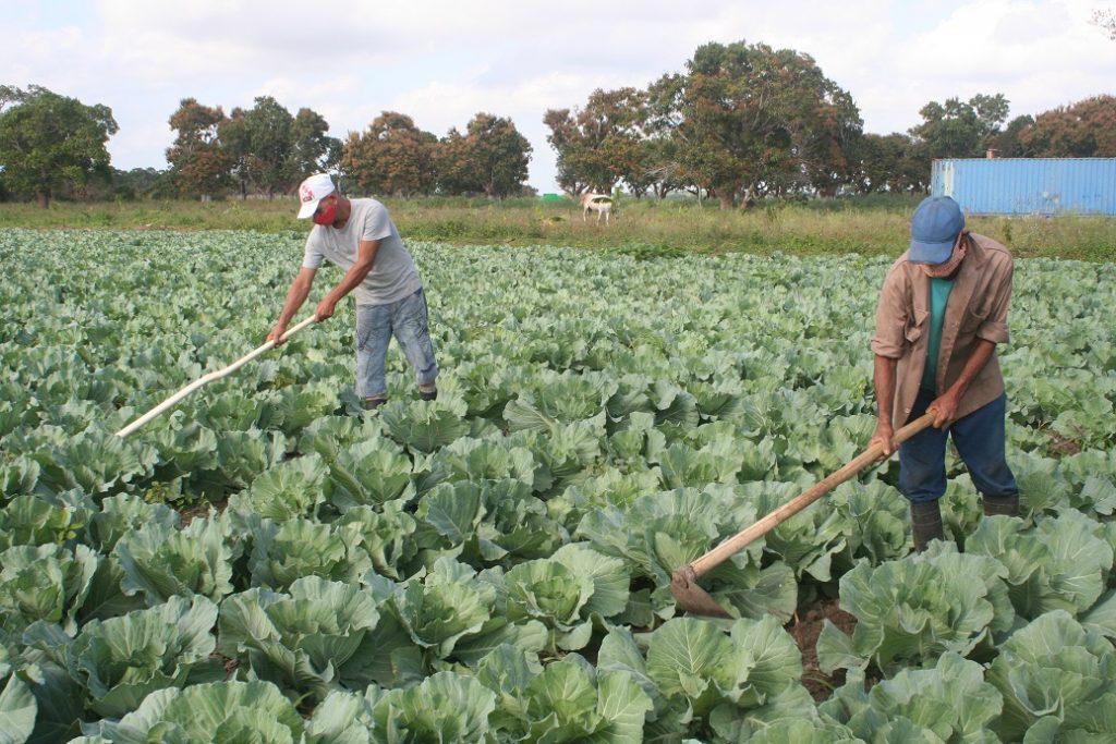 Área de la finca de Abono orgánico dedicada a las hortalizas
